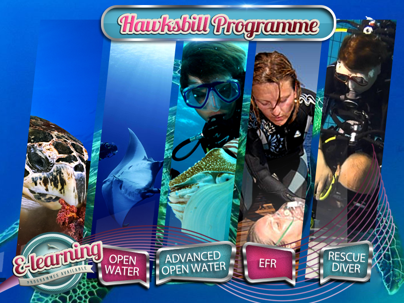 The Hawksbill - Level 3 Academy Course Package Plan