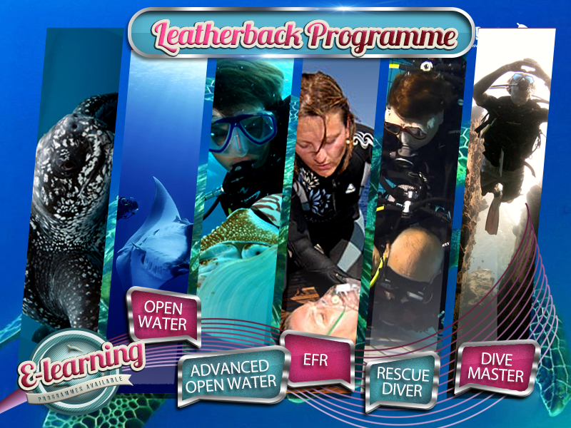 The Leatherback - Academy Course Packages Plan