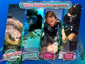 The Olive Ridley - Course Packages Plan