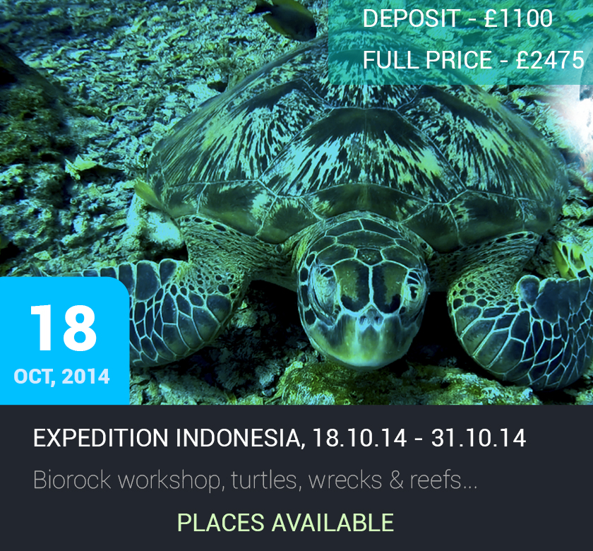 Expedition Indonesia