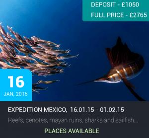 Expedition Bullshark: Caribbean Mexico @ Playa Del Carmen & Cozumel | Playa del Carmen | Quintana Roo | Mexico