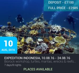Expedition Biorock: Indonesia @ Gili Trawangan, Lombok & Bali, Nusa Lembongan, Indonesia | West Nusa Tenggara | Indonesia